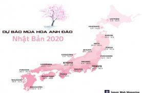 Hoa anh đào Nhật Bản nở sớm