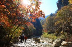 Spectacular Seorak in the golden leaf season