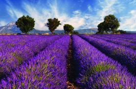Những thiên đường hoa đẹp hút khách trên thế giới