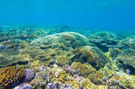 Lặn ngắm san hô Cù Lao Xanh