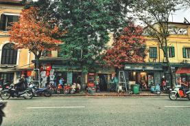 The golden autumn of Hanoi