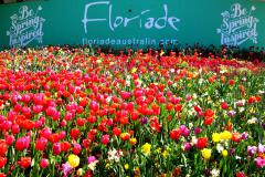 ÚC MÙA XUÂN: MELBOURNE - CANBERRA: LỄ HỘI HOA FLORIADE  - SYDNEY