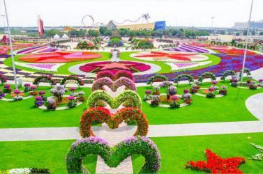 DUBAI - ABUDHABI - VƯỜN HOA MIRACLE
