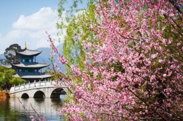 TRUNG QUỐC mùa hoa Anh Đào: CÔN MINH - ĐẠI LÝ - LỆ GIANG - THẠCH LÂM